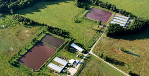 pits of pig sewage in rural farm