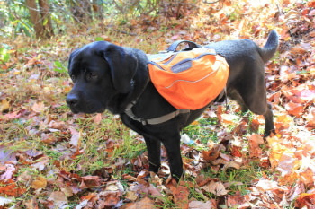dog with bug out bag hiking