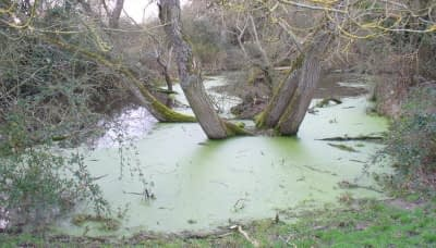 A pool of stagnant water in the woods