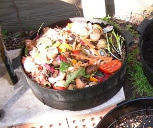collecting food scraps in a container