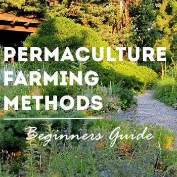permaculture farming methods