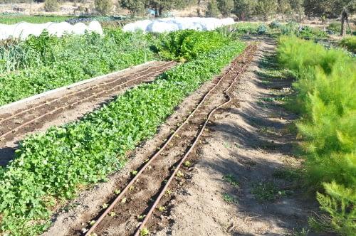 drip irrigation system in garden