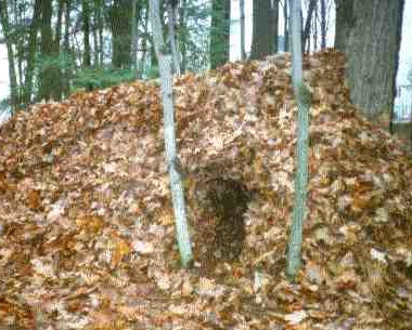 cocoon shelter constructed in leaves