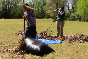 Two men raking up leaves and putting into bags in the fall