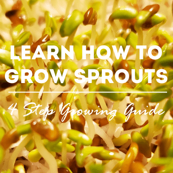grow-sprouts