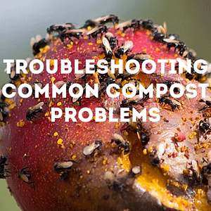 troubleshooting common compost problems