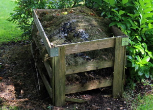 compost pile in wooden crate surrounded by vegetation