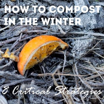 how-to-compost-in-the-winter