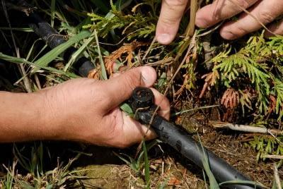 installing a drip irrigation emitter