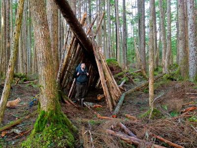 fallen tree shelter in woods