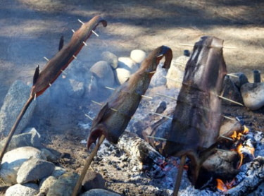 roasting fish on a survival campfire