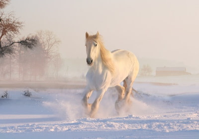 Horse running through snow in the winter time
