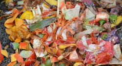 table scraps for green matter in composting